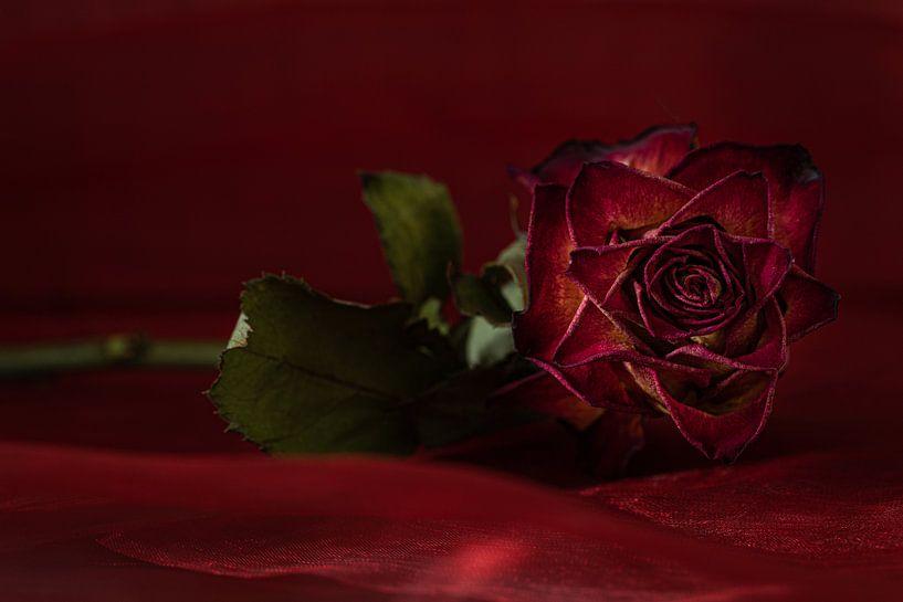 De rode roos van Hetwie van der Putten