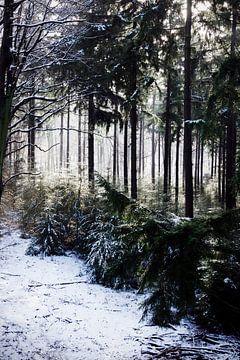 Boslandschap in de sneeuw en mist van Maja Artwork