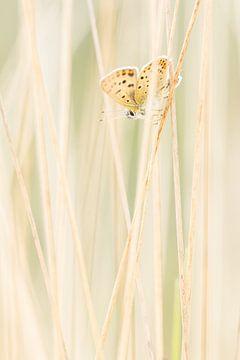 Brauner Schmetterling zwischen Rohrstrohvegetation von Thijs van den Burg