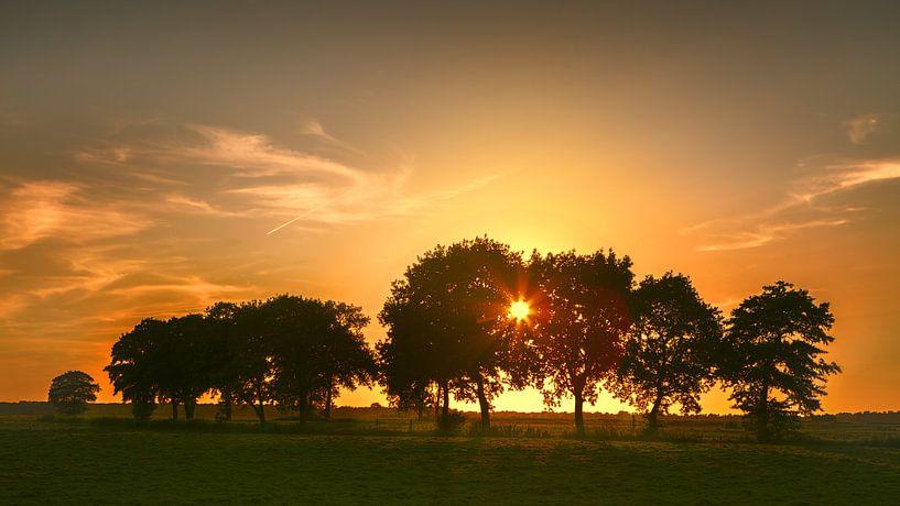 Avond in De Onlanden - Zon door de bomen van R Smallenbroek