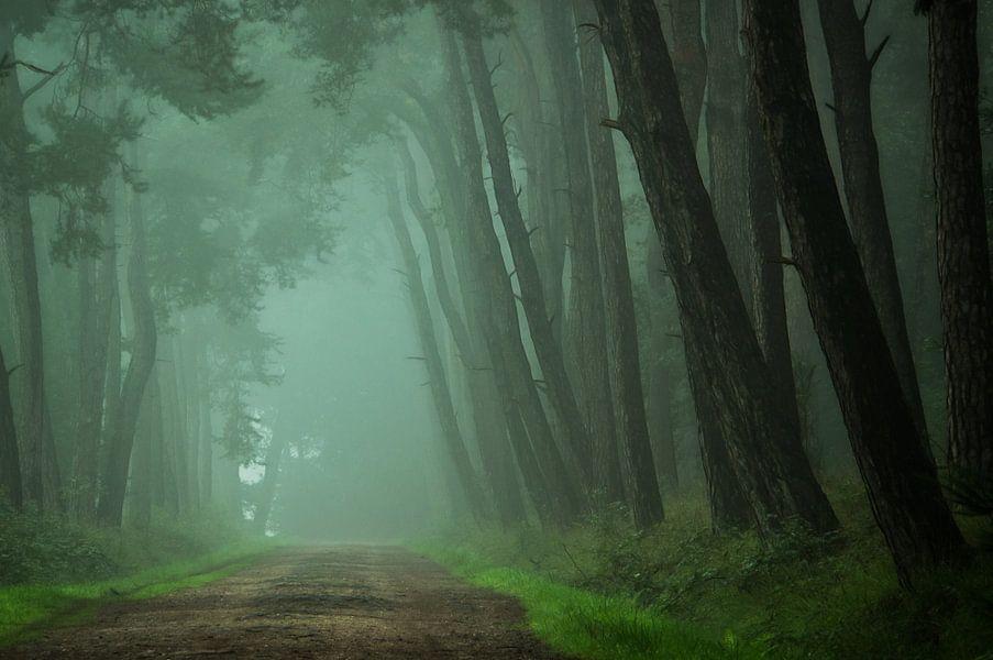 Path to the Unknown van Martin Podt