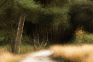 Heide pad van Ingrid Van Damme fotografie