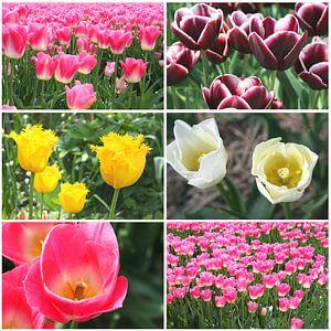Collage tulpen, lente