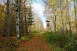 Waldweg im Herbst von Toni Stauche