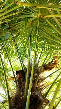 Palmboom in de zomer van Lisa Becker
