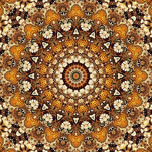 Kaleidoscoop Vlinders
