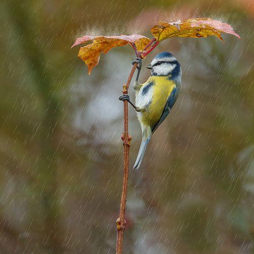 Pimpelmees en paraplu