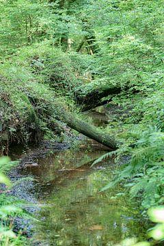 Niederländischer Dschungel von Ruud Overes