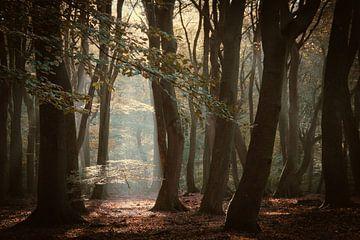 Speulderbos het bos van de dansende bomen