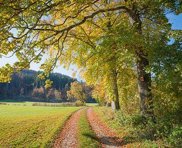 Chemin de randonnée le long du Mangfall sur Susanne Bauernfeind