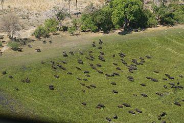 Buffels in de diepte van Erna Haarsma-Hoogterp