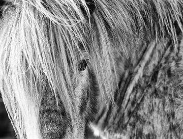 Pony Suusje von Anita Smink