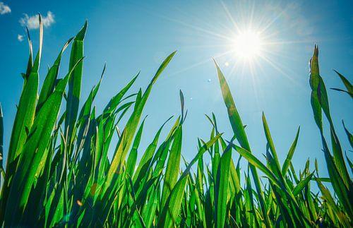 Ein sonniger Frühlingstag van Hannes Cmarits