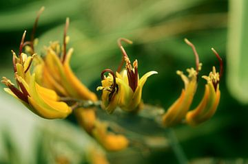 Bloemen 5 van Miriam Duda