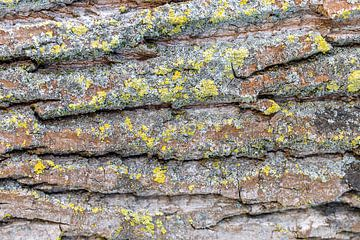 Baumrinde - Struktur von Fotografie Ploeg