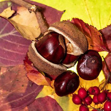 Kastanie auf Herbstlaub van
