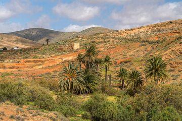 Vega de Río Palmas, Fuerteventura van Peter Schickert