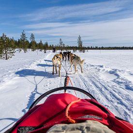 Hondenslee in lapland, prachtige lucht. (huskyhondentocht) van Michael Bollen