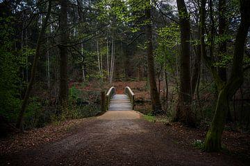 Holzbrücke führt über einen Fluss in einem Nadelmischwald mit dunklen Buchenstämmen und den ersten g von Maren Winter