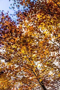 Herfstkleuren in het park. van Joost Potma