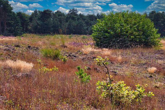De Weerterheide een mooi natuurgebied in Limburgs Nederland