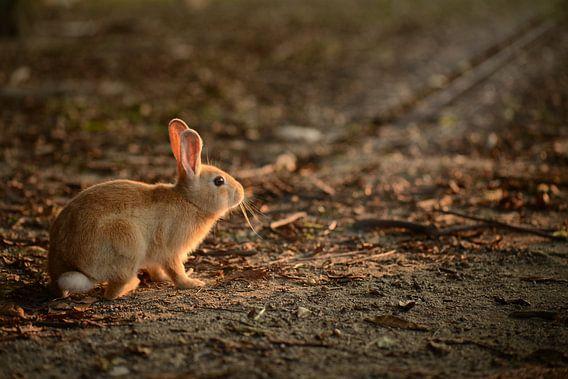 Konijntje op Rabbit Island, Japan van Robert van Hall