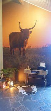 Kundenfoto: Schottischer Hochlandbewohner von Karel Ton