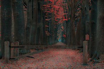 Wald Orangenwald von Claudia De Vries