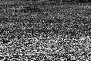 One million steps, fascinerende schaduw tijdens de zonsondergang op de Loonse en Drunense duinen, No