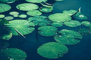 Seerosenblätter auf Wasser von Dirk Wüstenhagen