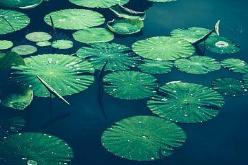 Waterleliebladeren op water van Dirk Wüstenhagen