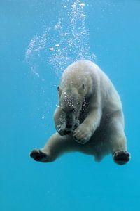 duiken en spelen