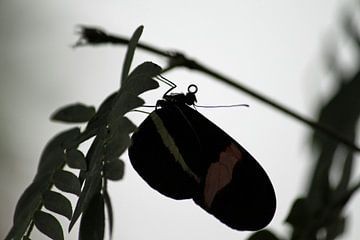 Schaduw vlinder van Klaase Fotografie