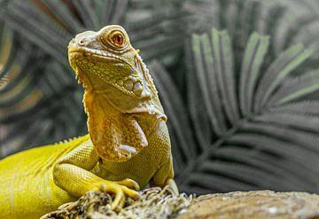 Iguana hagadis portret van Gabrielle van der Hel