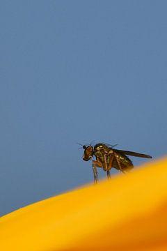 Mug op zonnebloem