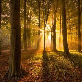 Herfstbos met Zonnestralen von Martijn van der Nat