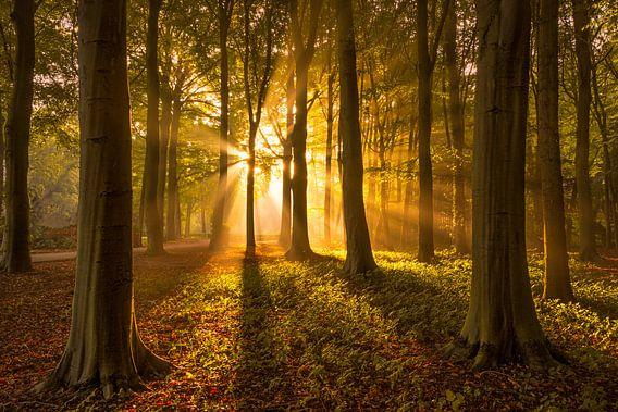 Herfstbos met Zonnestralen van Martijn van der Nat