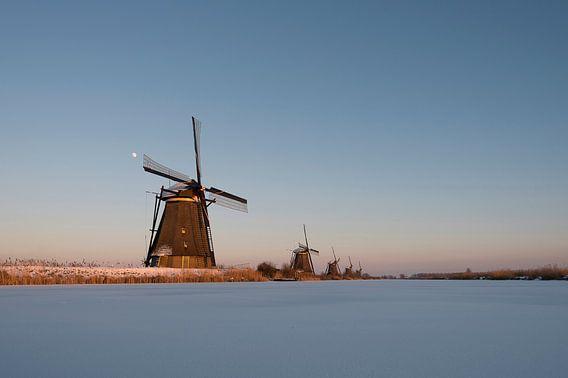 The last light van Aline van Weert