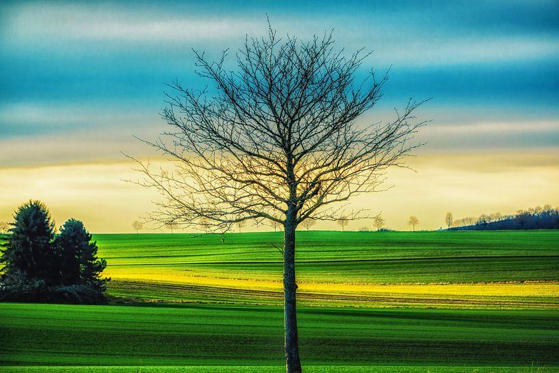 Landschaft mit Baum von Holger Debek