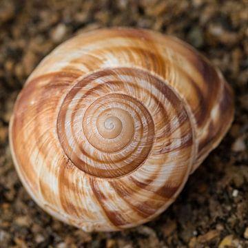 schelp spiraal van Klaartje Majoor