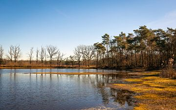 Kleiner See in einem niederländischen Naturschutzgebiet von Ruud Morijn