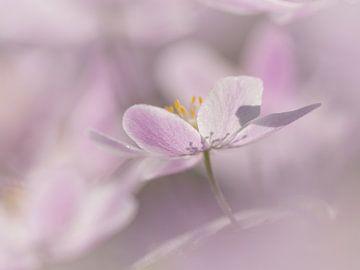 Roze van Jacqueline Heemskerk