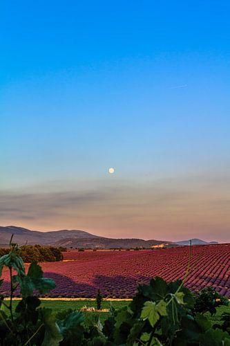 Lavender Moon I van