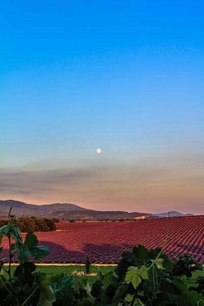 Lavender Moon I van Marcel de Groot