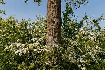 Natur von Myrthe Vlasveld