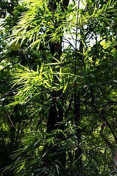 Bambou à la verticale dans la jungle sur Bianca ter Riet