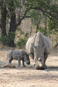 Nashorn mit Baby und Vogel in Afrika
