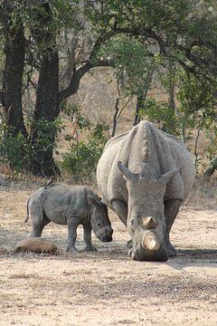 neushoorn met baby en vogel in afrika van Christiaan Van Den Berg