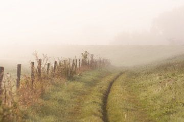 wandelen in de mist van Tania Perneel