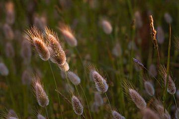 Winkende Stacheln in der Sonne von Anouschka Hendriks